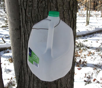 Water jug used for holding syrup